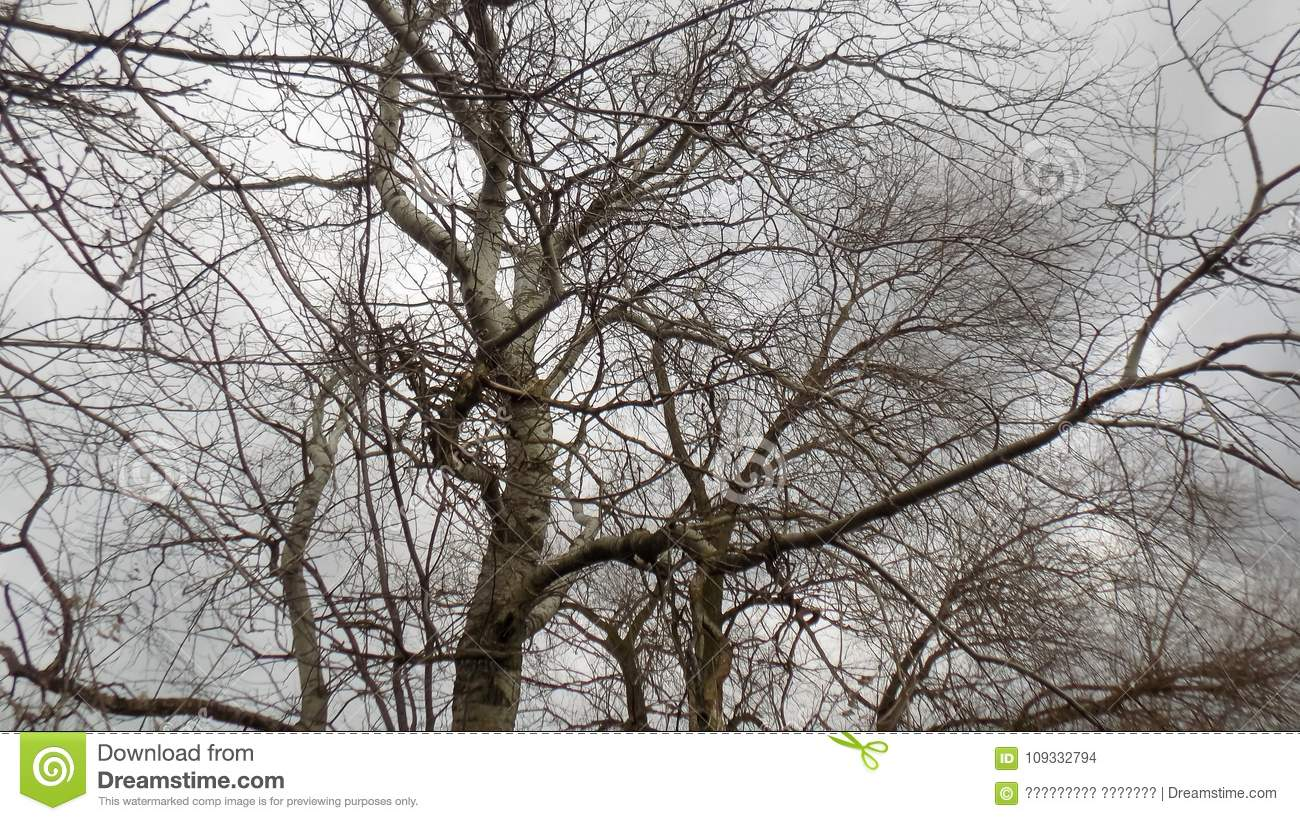 Abstract Winter Nature Beautiful Forest Background Tree Background