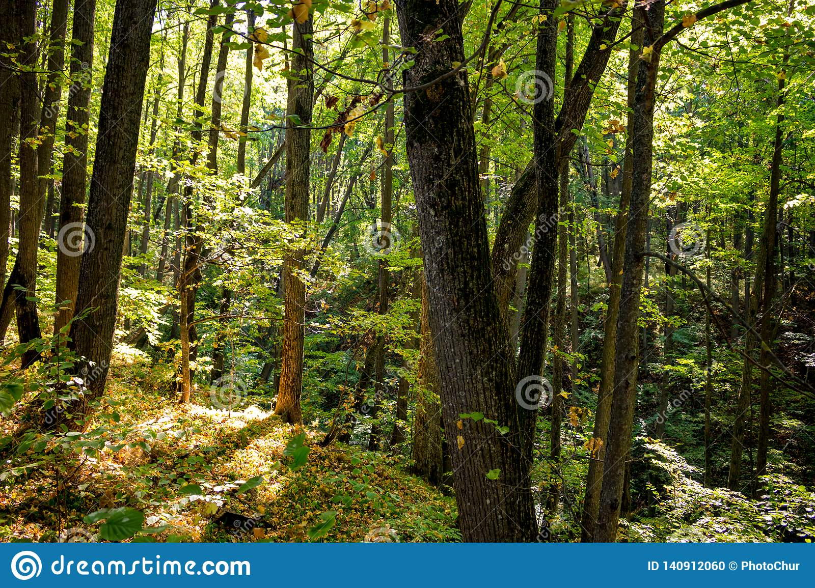 Beautiful forest in early autumn