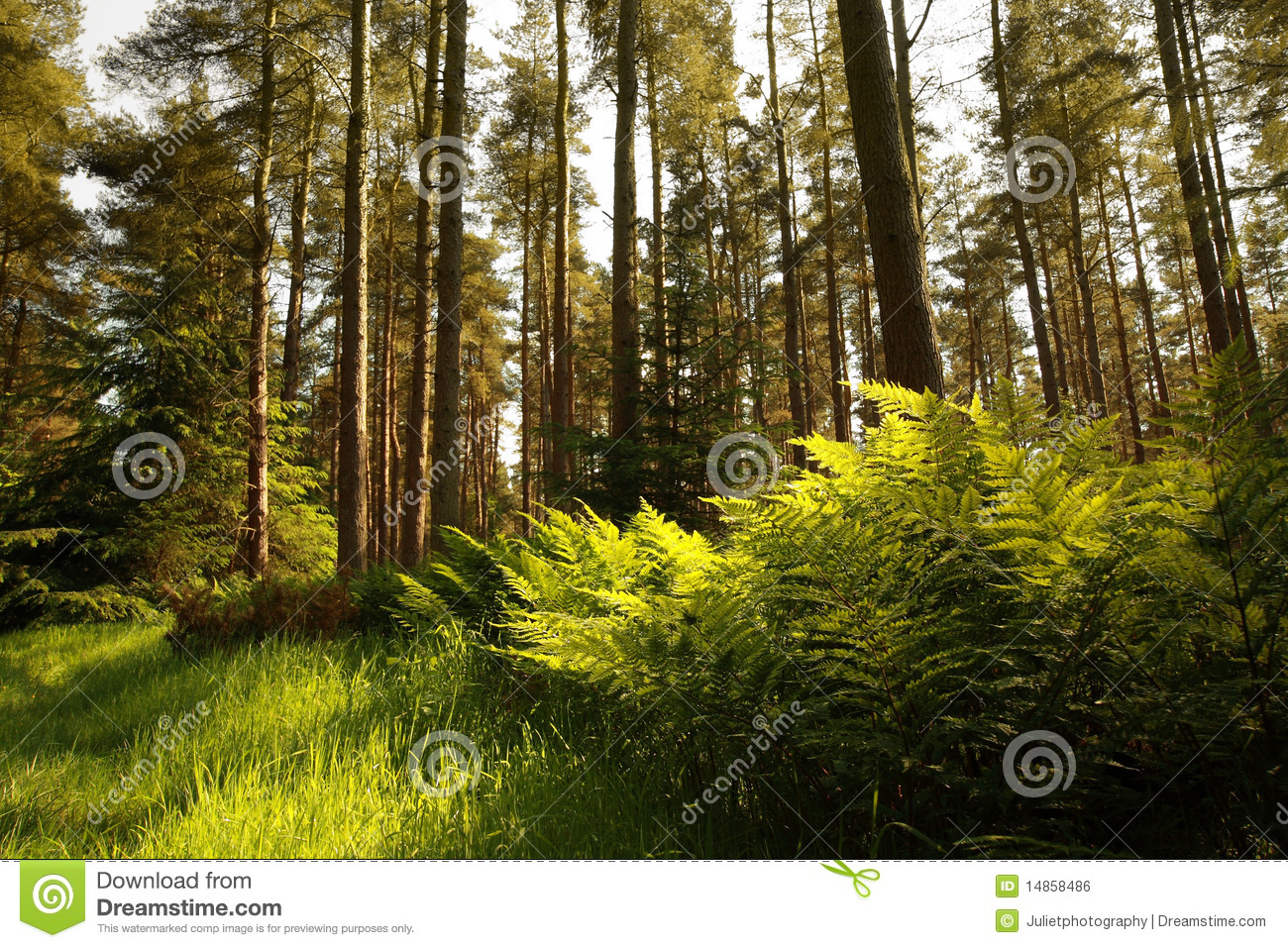 Beautiful forest with ferns