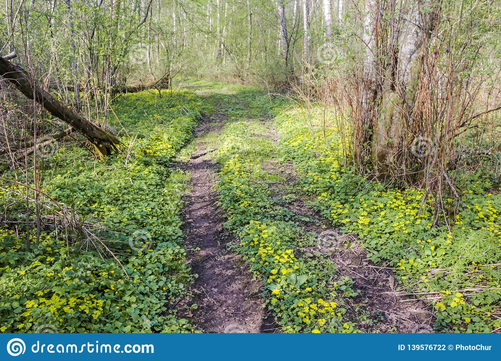 Beautiful forest road in yellow flowers