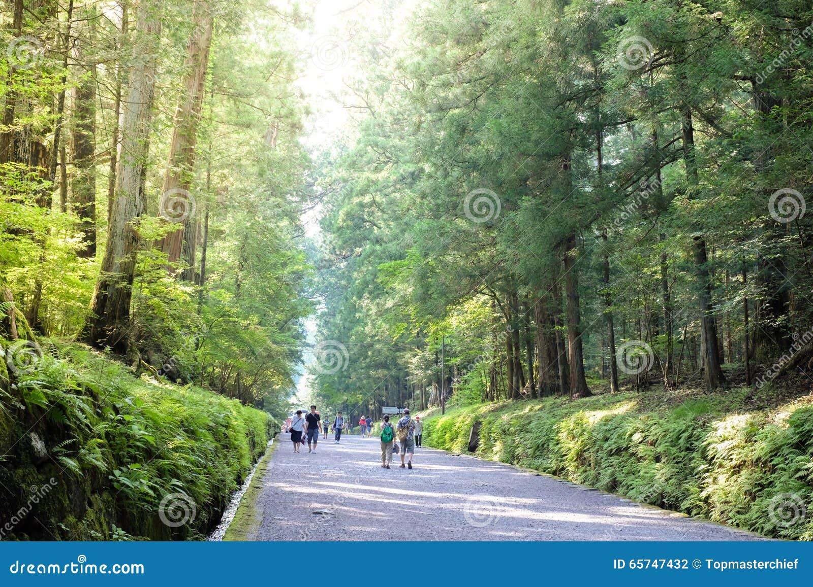 Editorial Stock Photo & Beautiful Forest Walk Way Near Nikko World Heritage Japan With ... azcodes.com