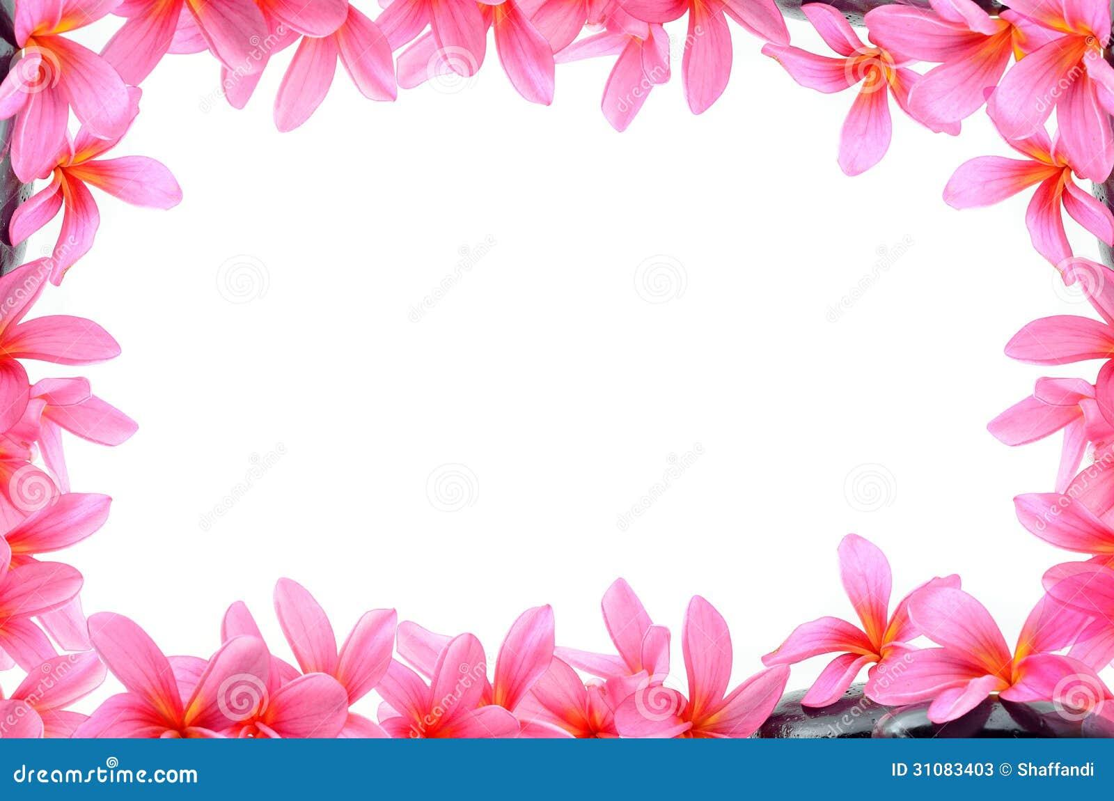 95+ Hawaiian Flowers Border - Beautiful Frangipani Flowers ...