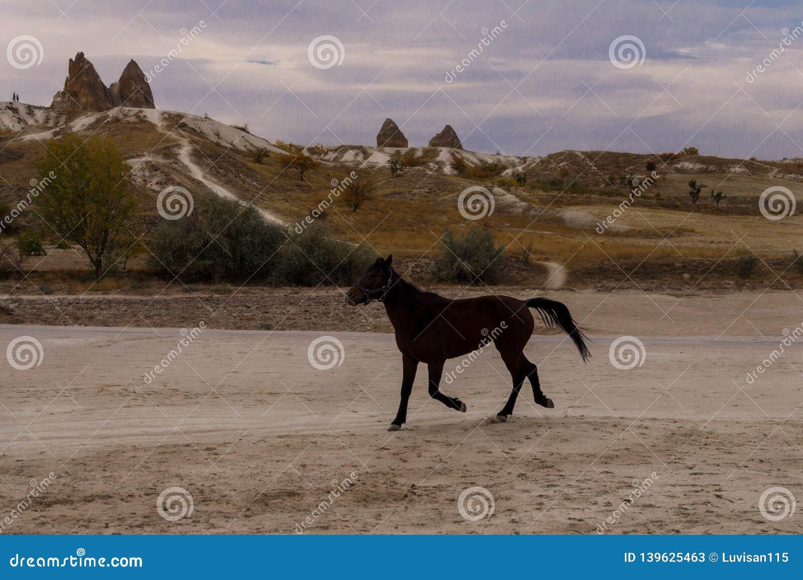 Beautiful free horse runs among stone sculptures