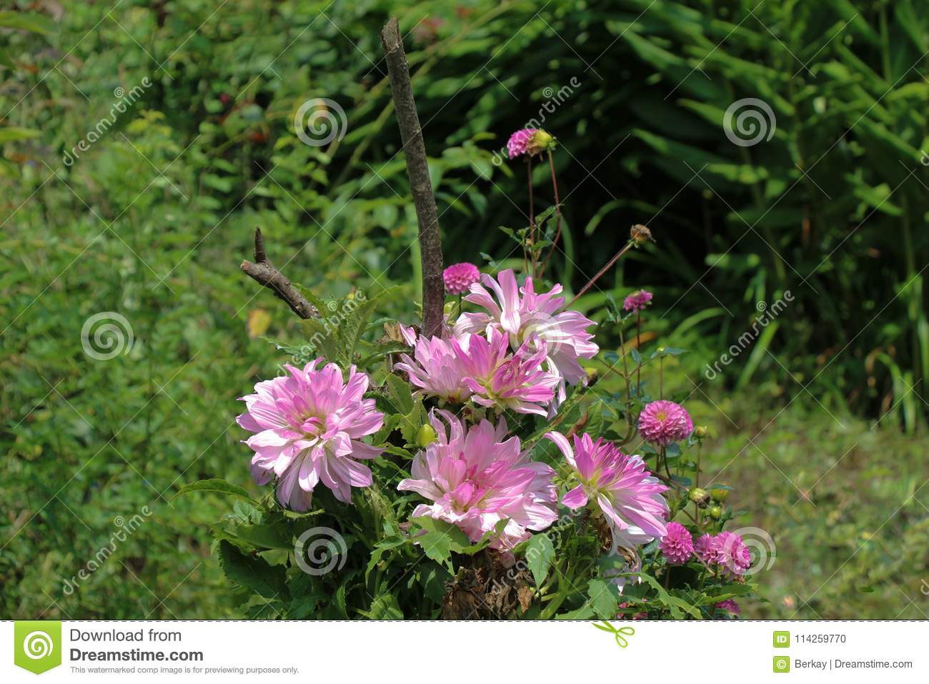 Beautiful flowers in nature stock photo image of disambiguation beautiful flowers in nature izmirmasajfo