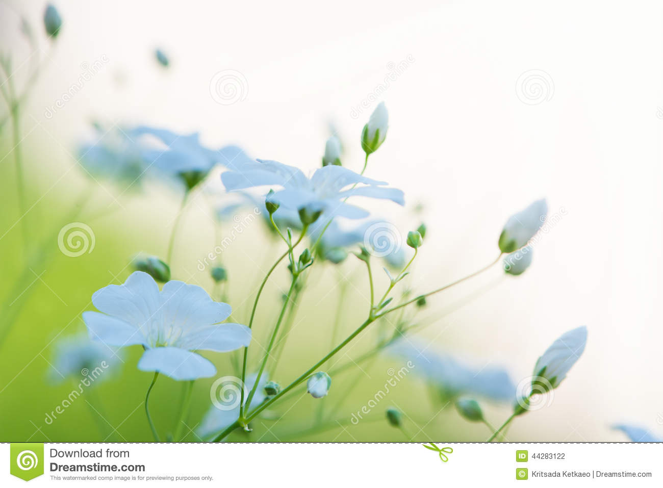 abstract beautiful white flowers - photo #8