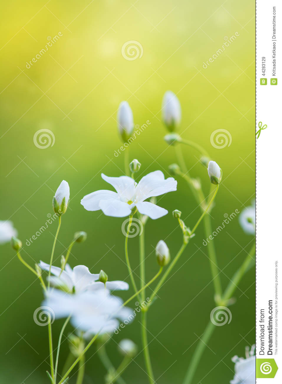 abstract beautiful white flowers - photo #7