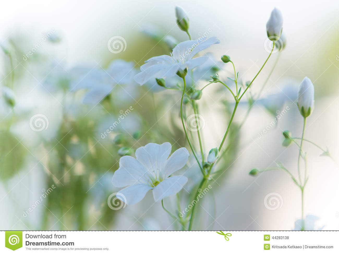 Beautiful Fresh White Flowers , Abstract Dreamy Floral ...
