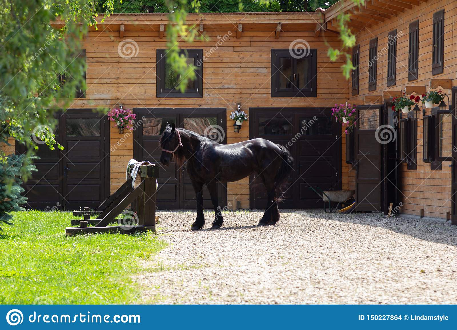 Beautiful Friesian Horse Outside Stables Stock Photo Image Of Domestic Fortress 150227864