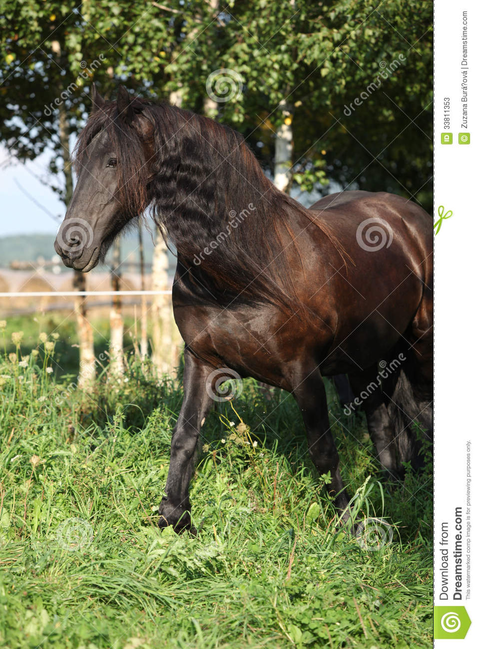 long manes stock photos - photo #33