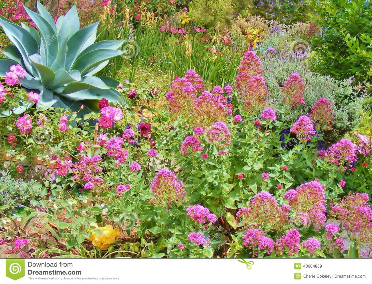 Beautiful garden of colorful plants and flowers stock image image beautiful garden of colorful plants and flowers izmirmasajfo