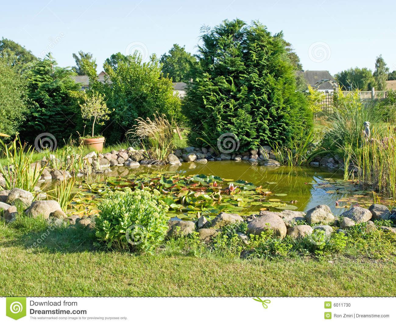 Beautiful Garden Fish Pond With Water Lilies Stock Photo