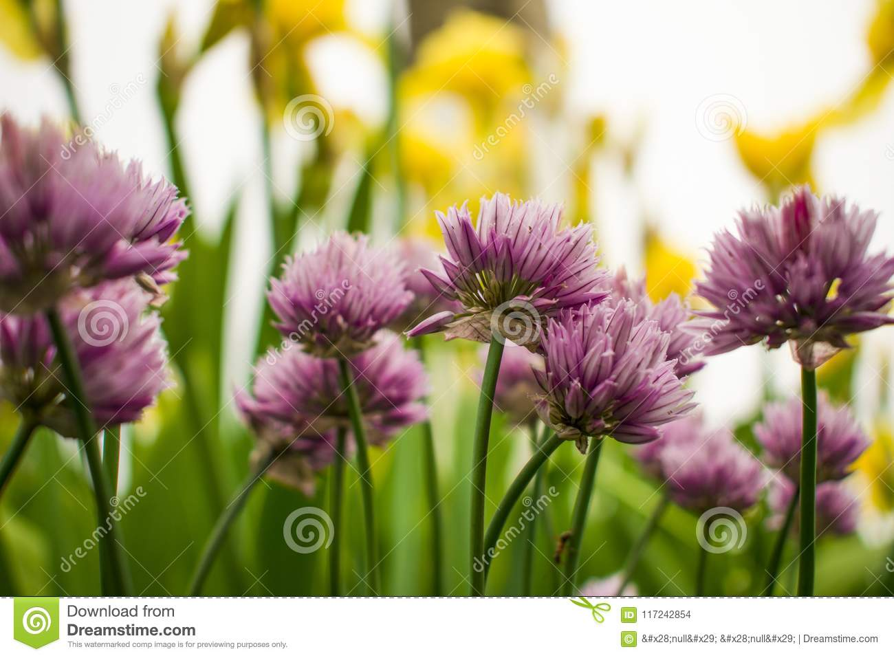 Beautiful Garden Flowers  Beauty Clubs  The Beauty Of The Earth