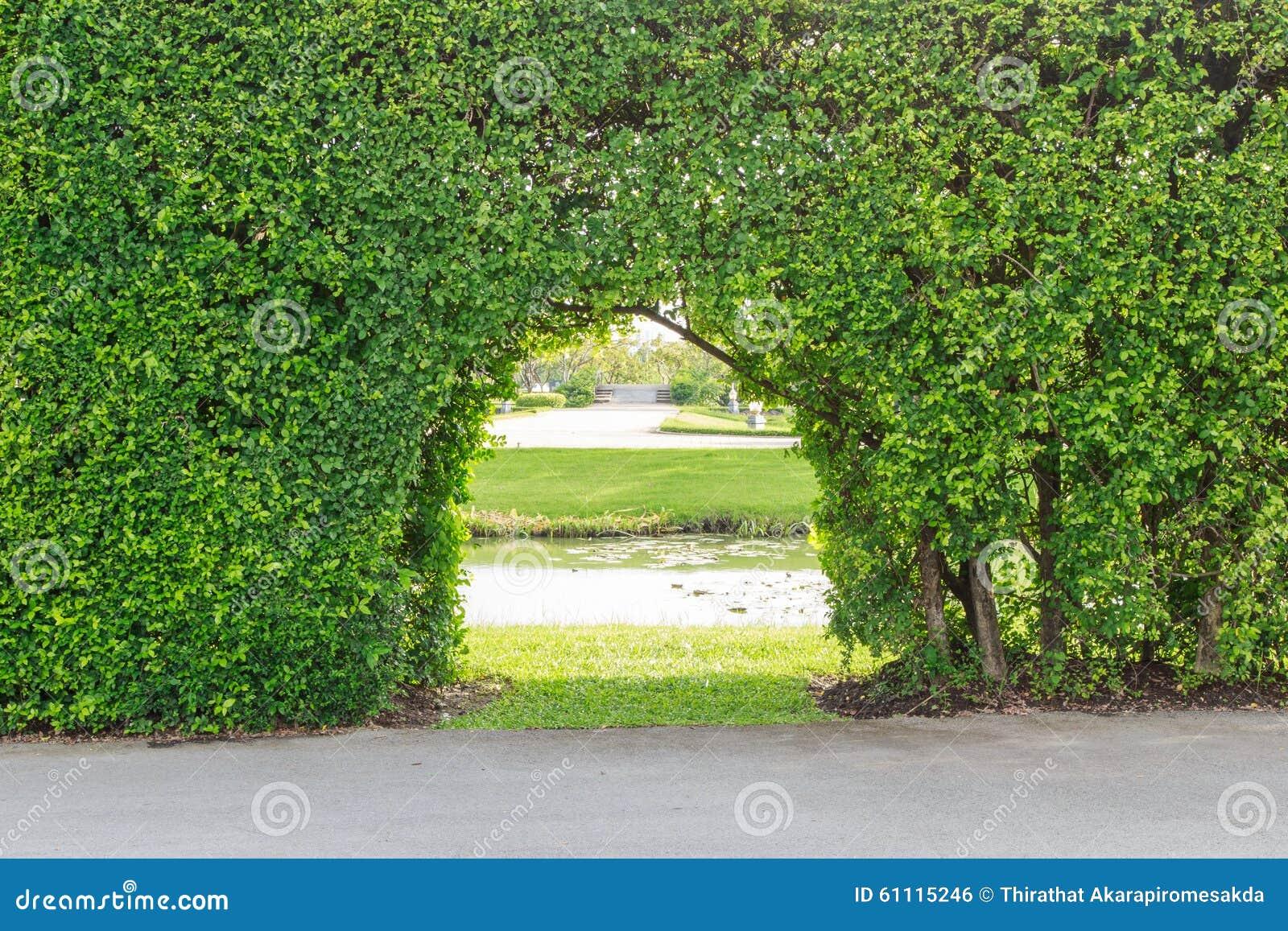 Beautiful garden trees 28 images garden design and for Most beautiful garden trees