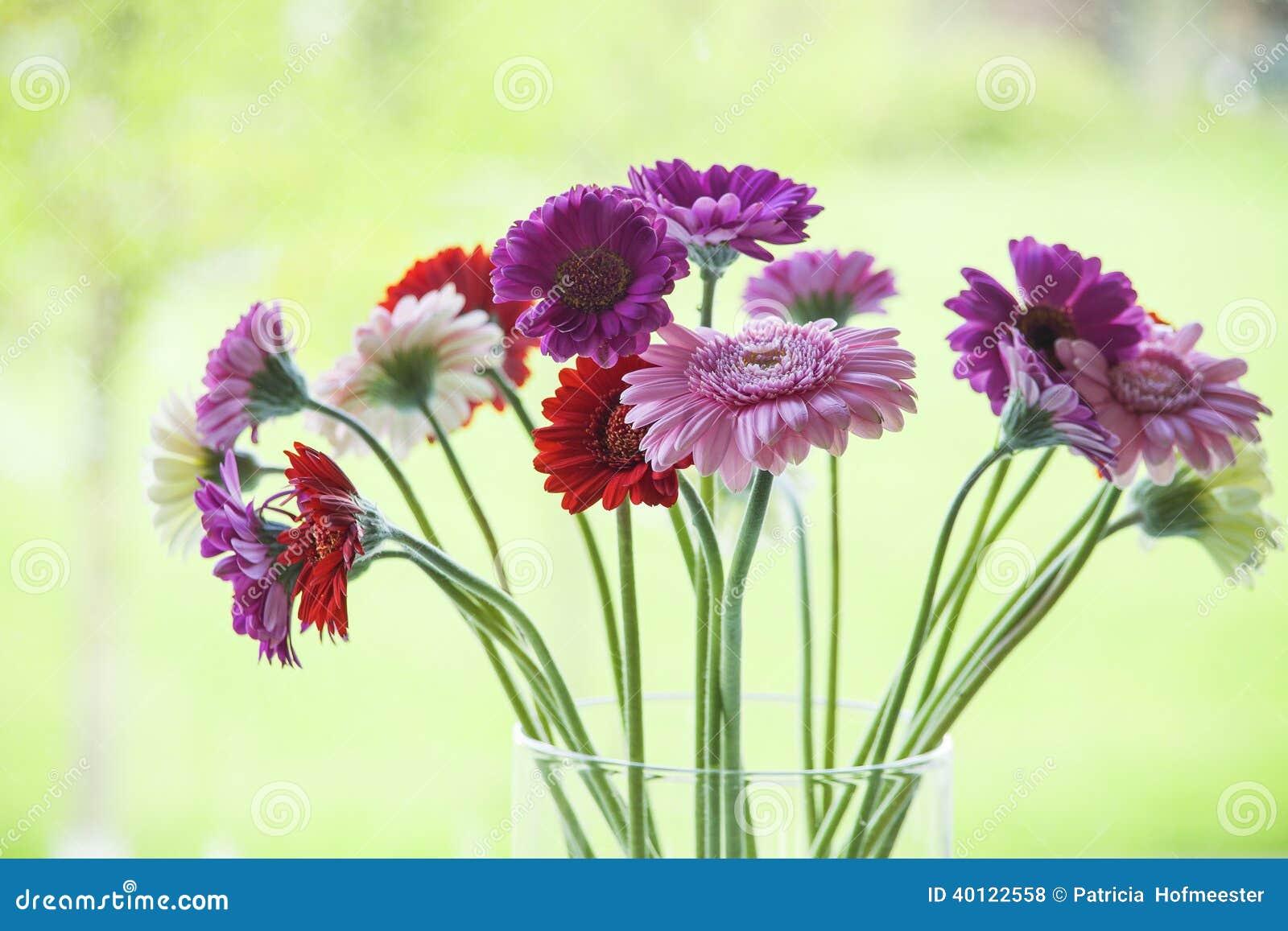 Beautiful Gerbera Daisies In A Vase Stock Photo - Image of ...