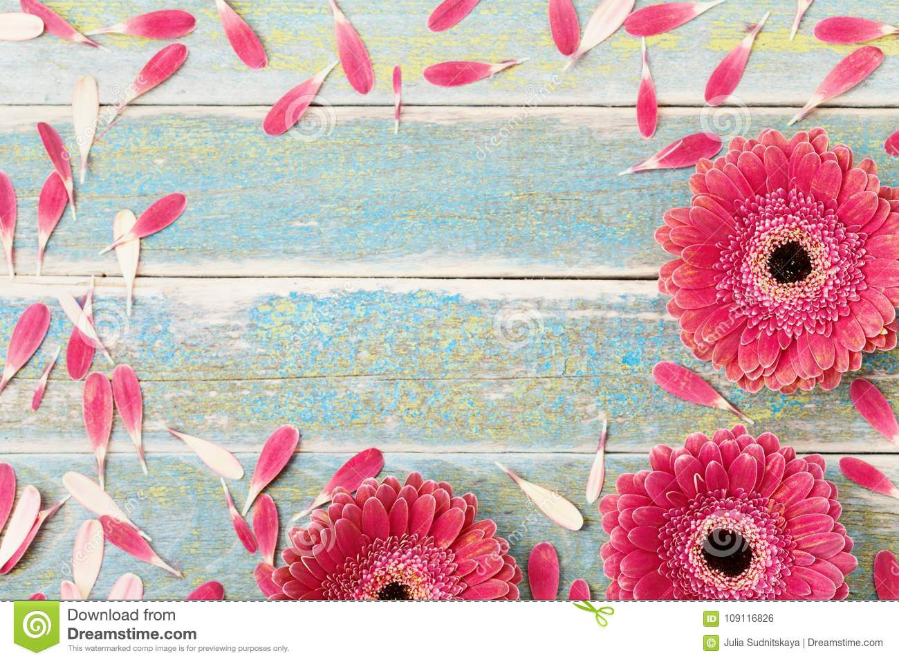 Beautiful gerbera daisy flower greeting card for mother or womans day background. Top view. Vintage style.
