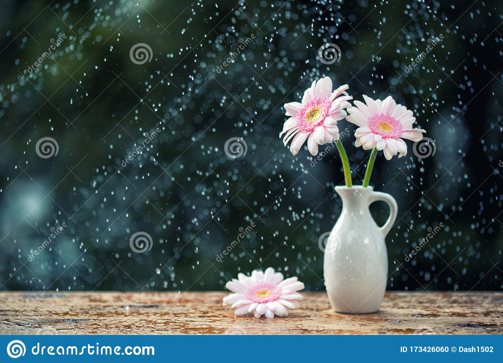 Beautiful Gerbera Daisy Flowers In Vase On Wooden Table Outdoors Under The Rain With Droplets Vintage Filter Stock Photo Image Of Design Droplet 173426060