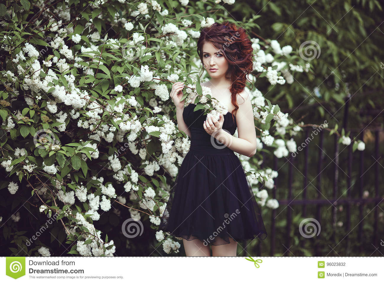 A Beautiful Girl In A Black Dress Poses Near A Bush With White