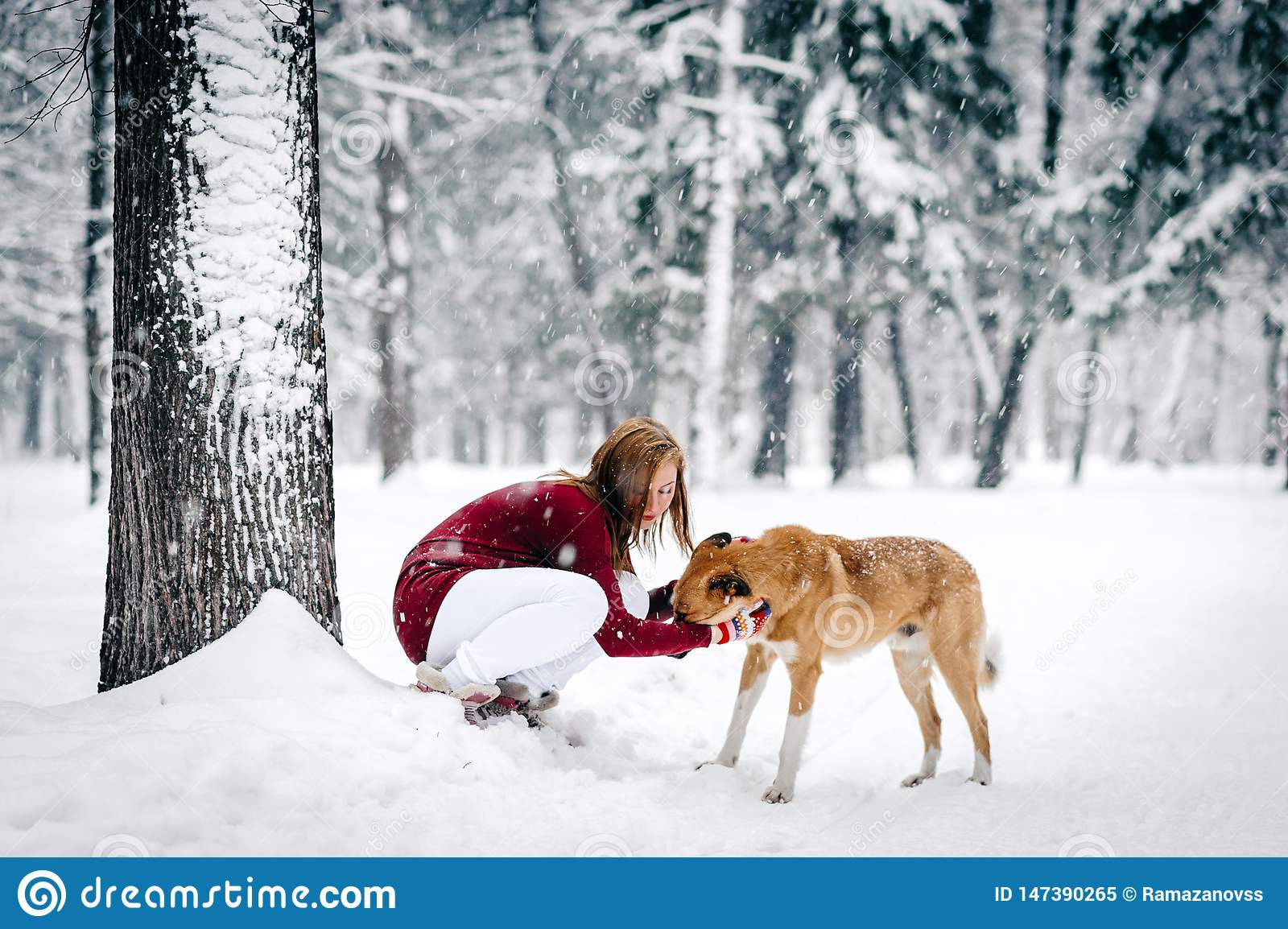 Beautiful girl dressed in a maroon sweater and white pants sat down next to red dog against a backdrop of snow-covered tree trunks