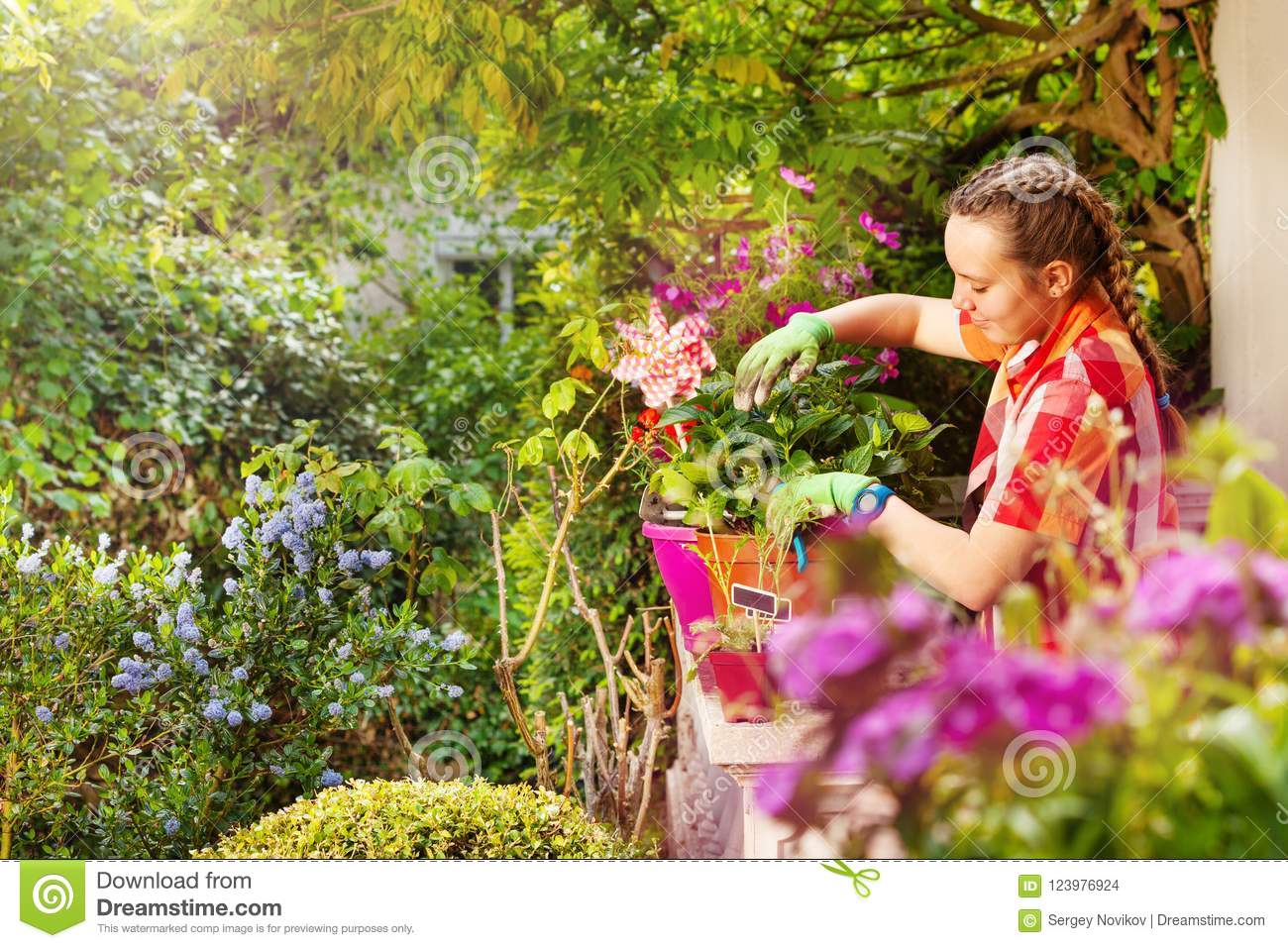 Beautiful Girl Pruning Potted Flowers On Balcony Stock Photo Image