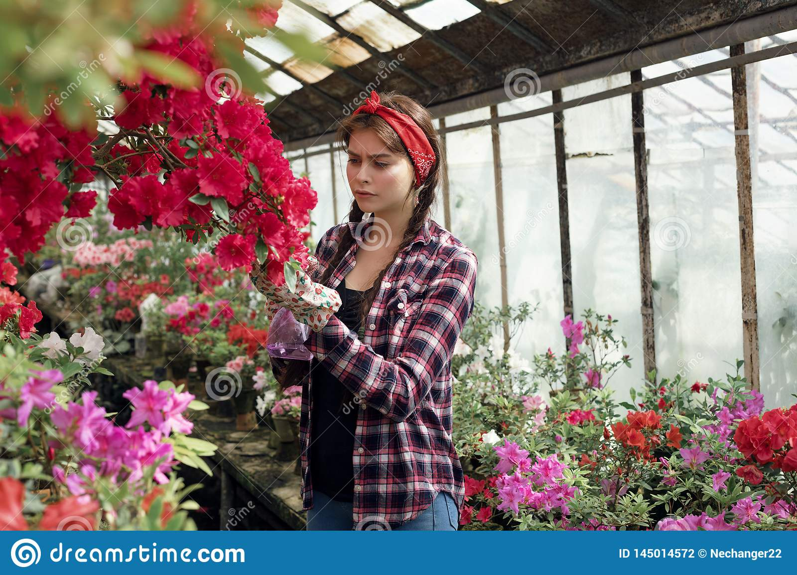 Beautiful girl student with a red headband care flowers in greenhouse in biology class