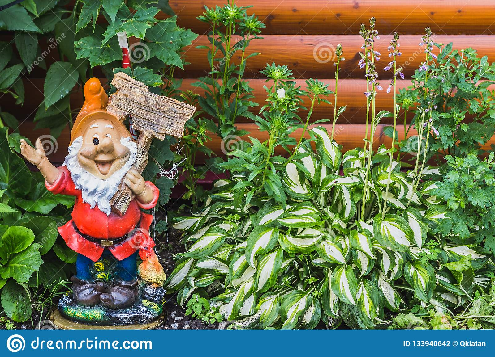 A Beautiful Gnome Garden Figure And Green And White Leaves Of Hosta