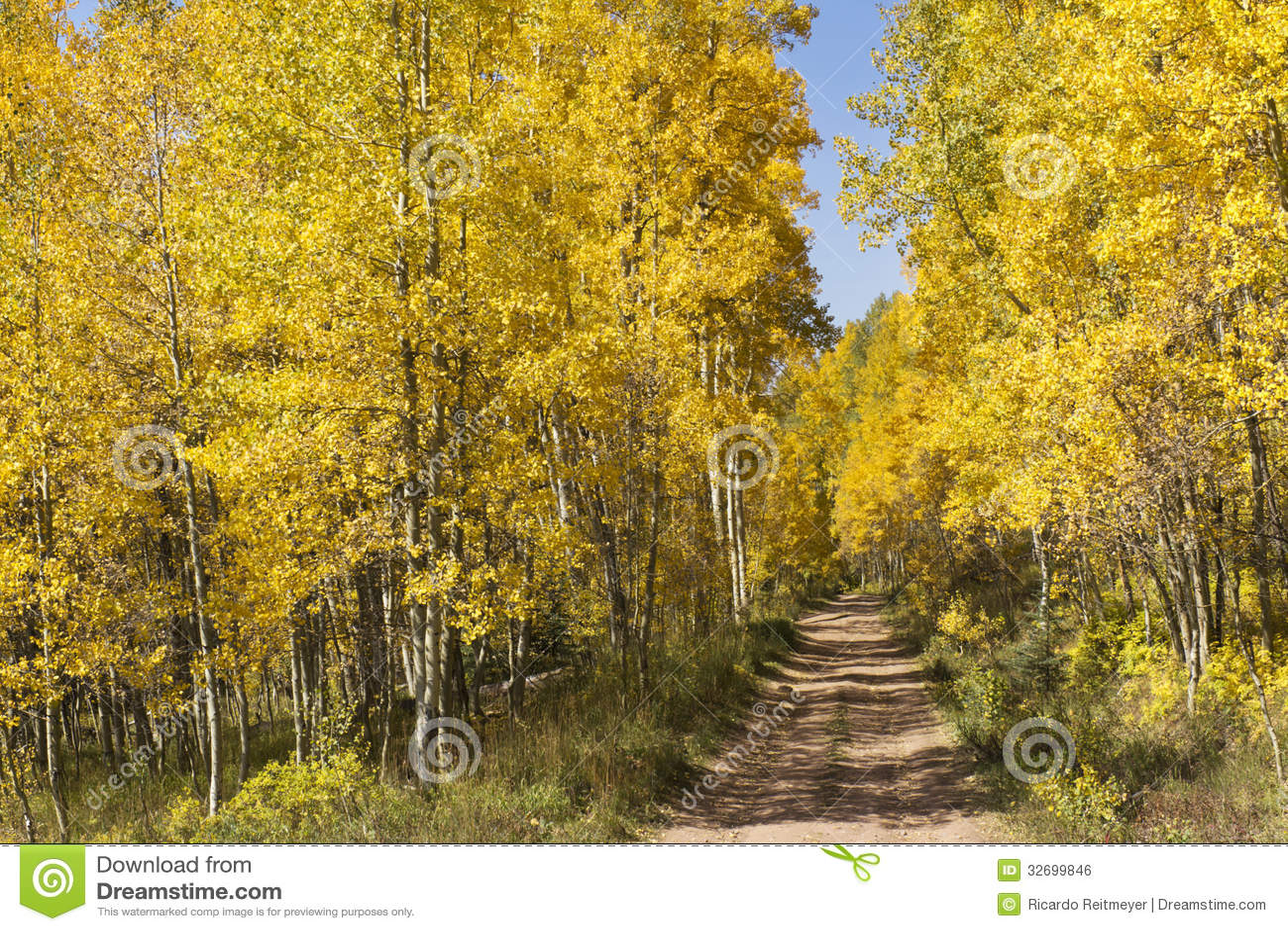 Beautiful Golden Aspen Lined Mountain Road Near Va