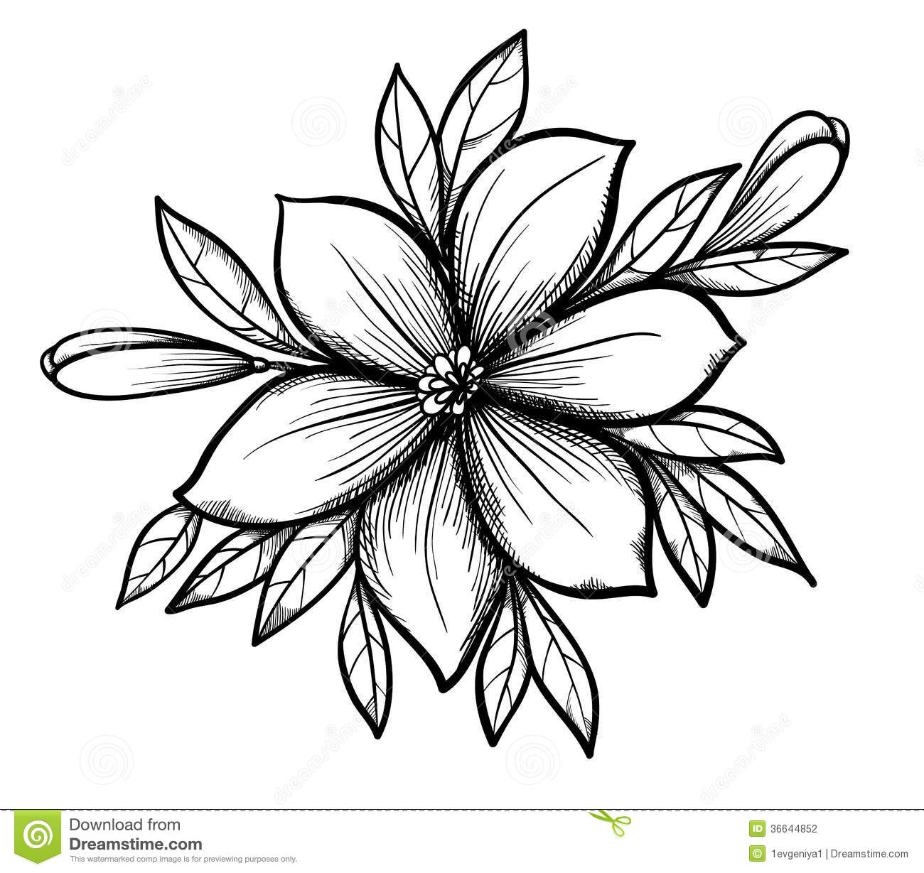 Flower Dibujo: Beautiful Graphic Drawing Lily Branch With Leaves Stock