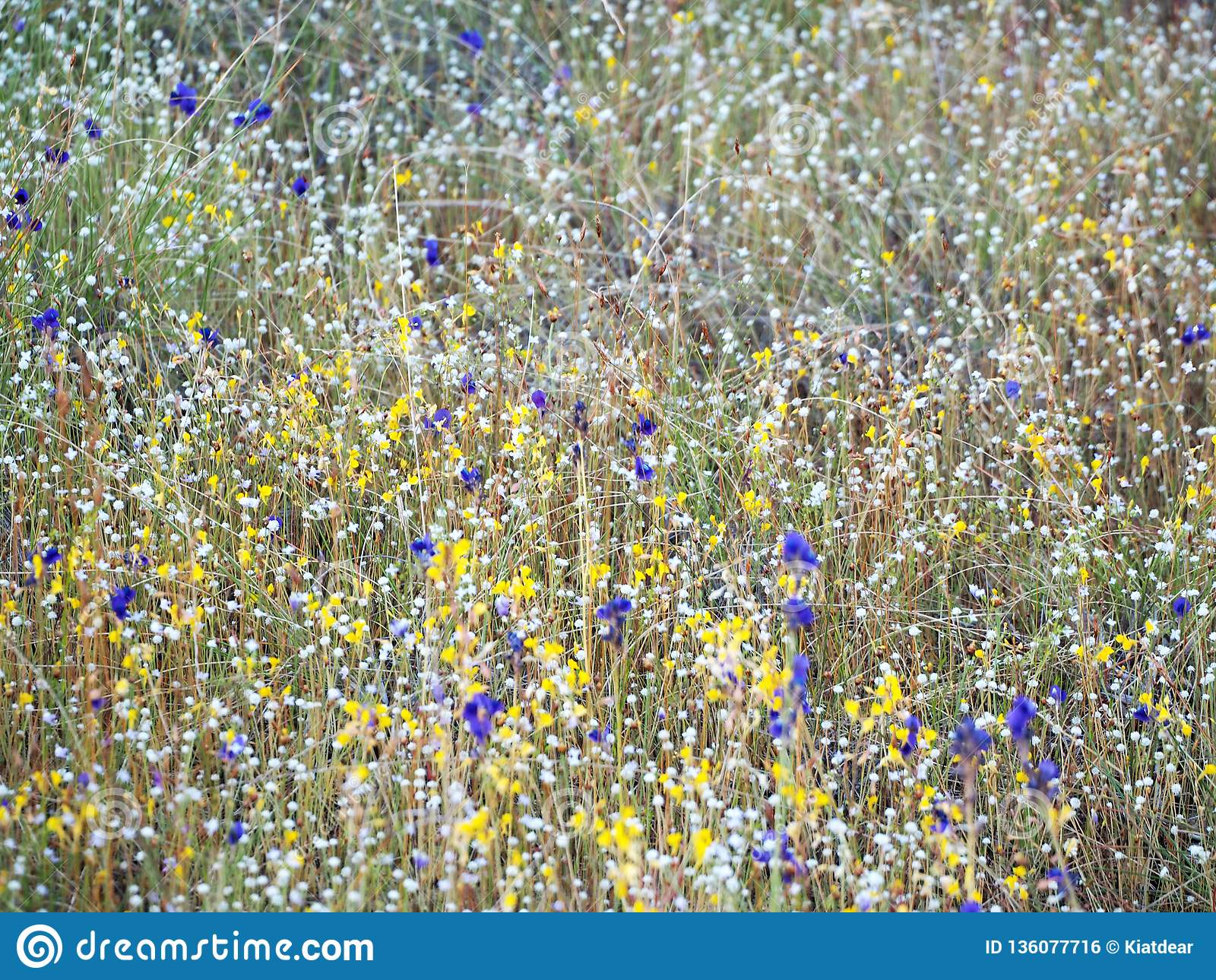 Beautiful grass flower in the field