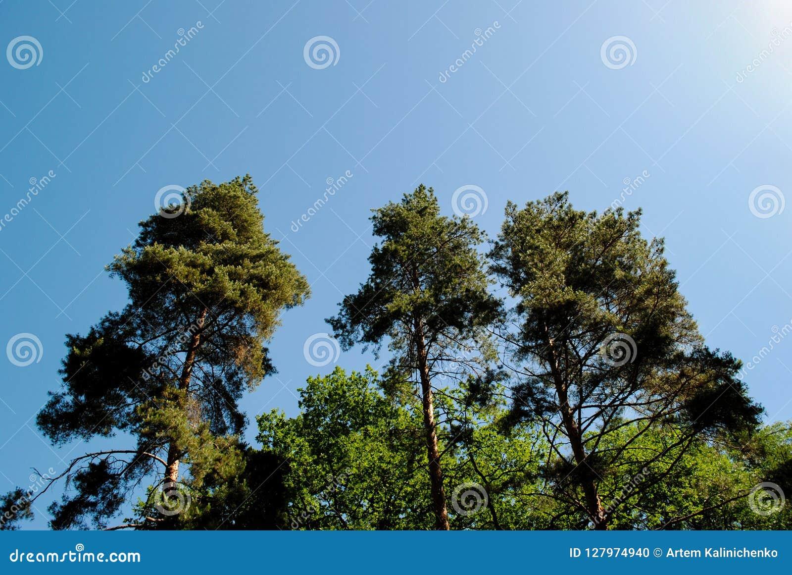 Beautiful green arboretum in the park Sofiyivka