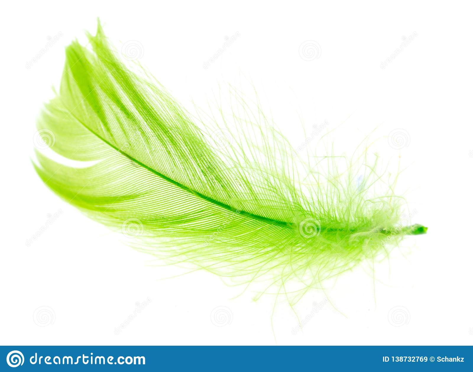 Beautiful green feather on a white background