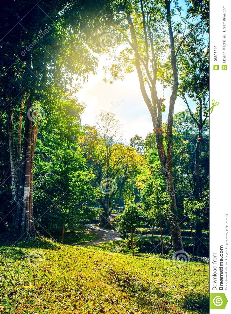 Beautiful green forest and national park scene nature - Background images nature ...