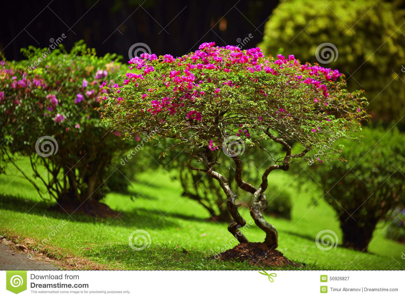 Beautiful green garden lawn with pink bushes stock photo for Small green outdoor plants
