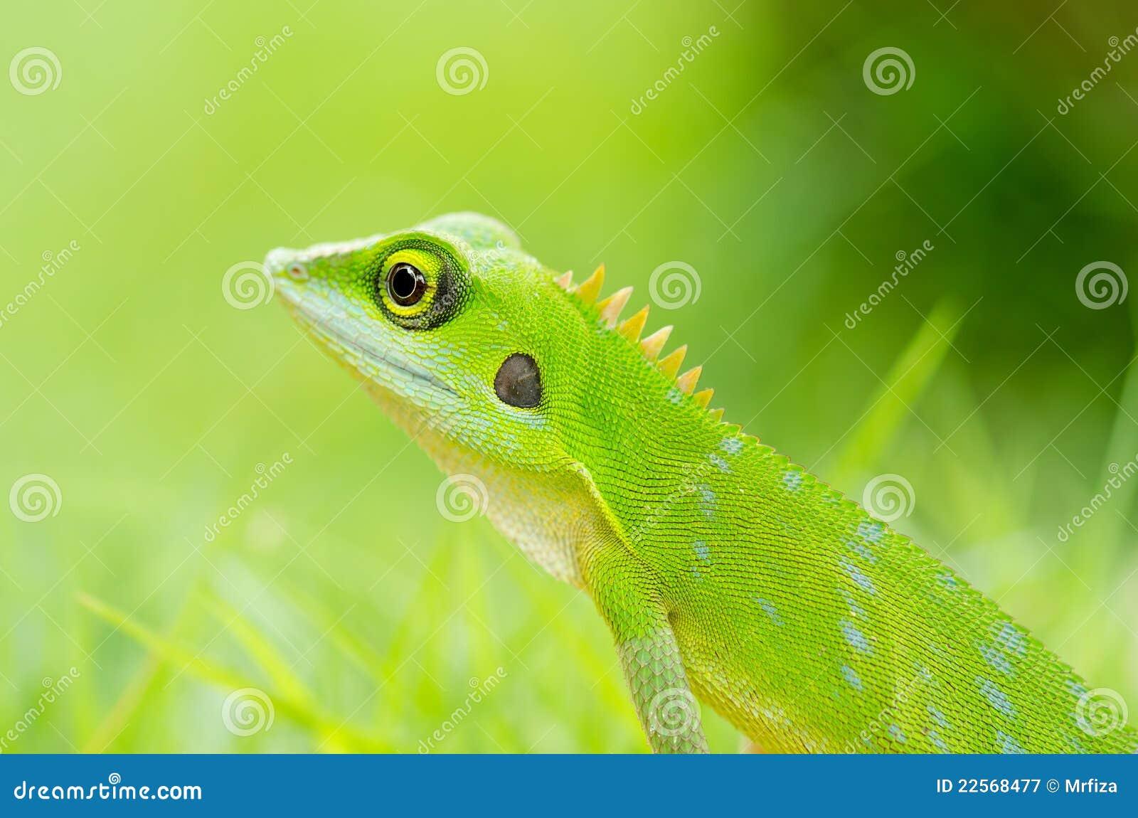 Crimson Lizard Web Design