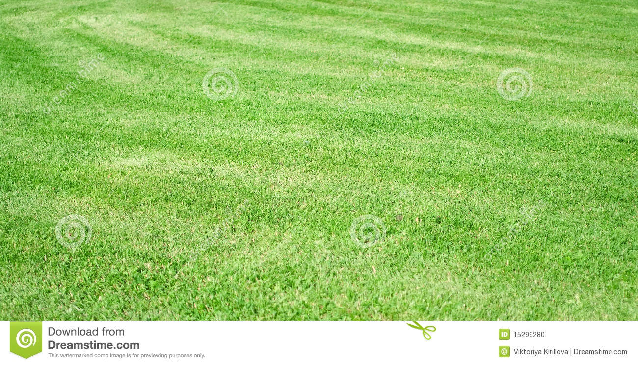 Beautiful green grass stock photo image of texture for Pretty grass