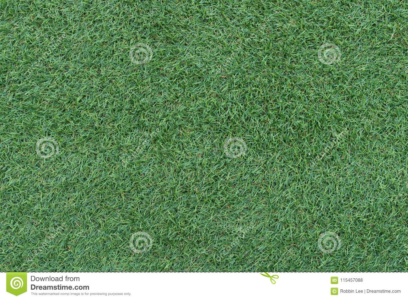 Beautiful green grass background, texture, pattern.