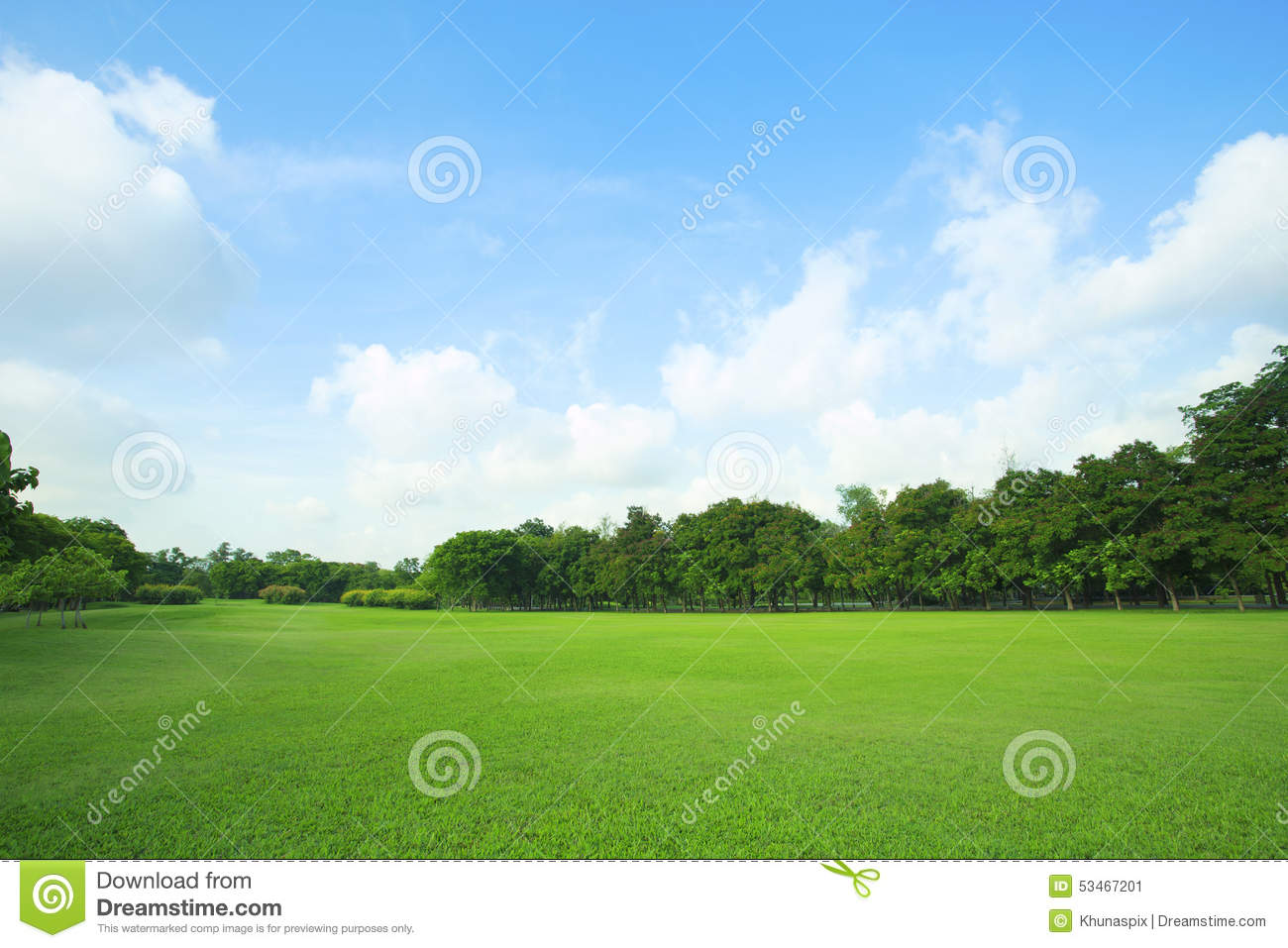 Beautiful green grass field and fresh plant in vibrant for Pretty grass