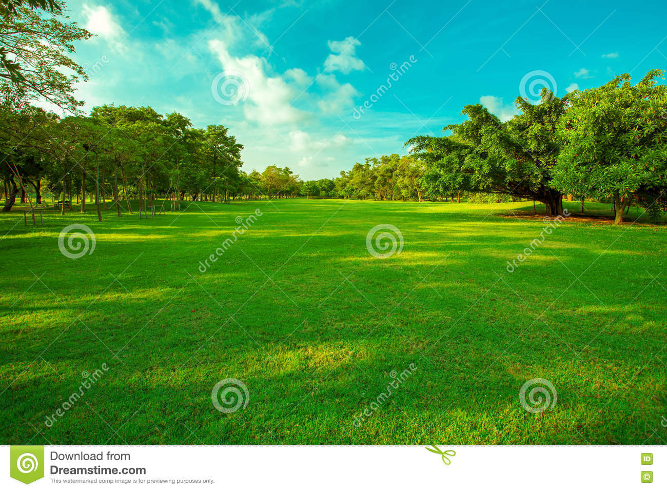 beautiful green grass field and fresh plant in vibrant meadow ag stock photo