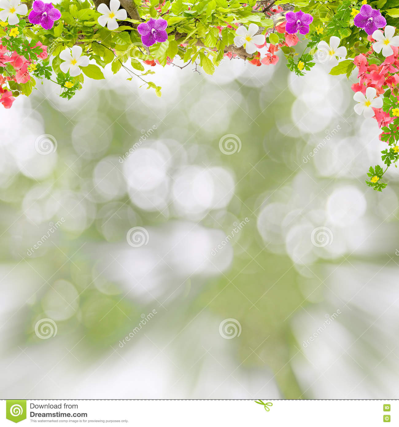 Nature blur background stock photos 128329 images beautiful green leaves frame with flower on scenery nature blur background stock photography izmirmasajfo Images