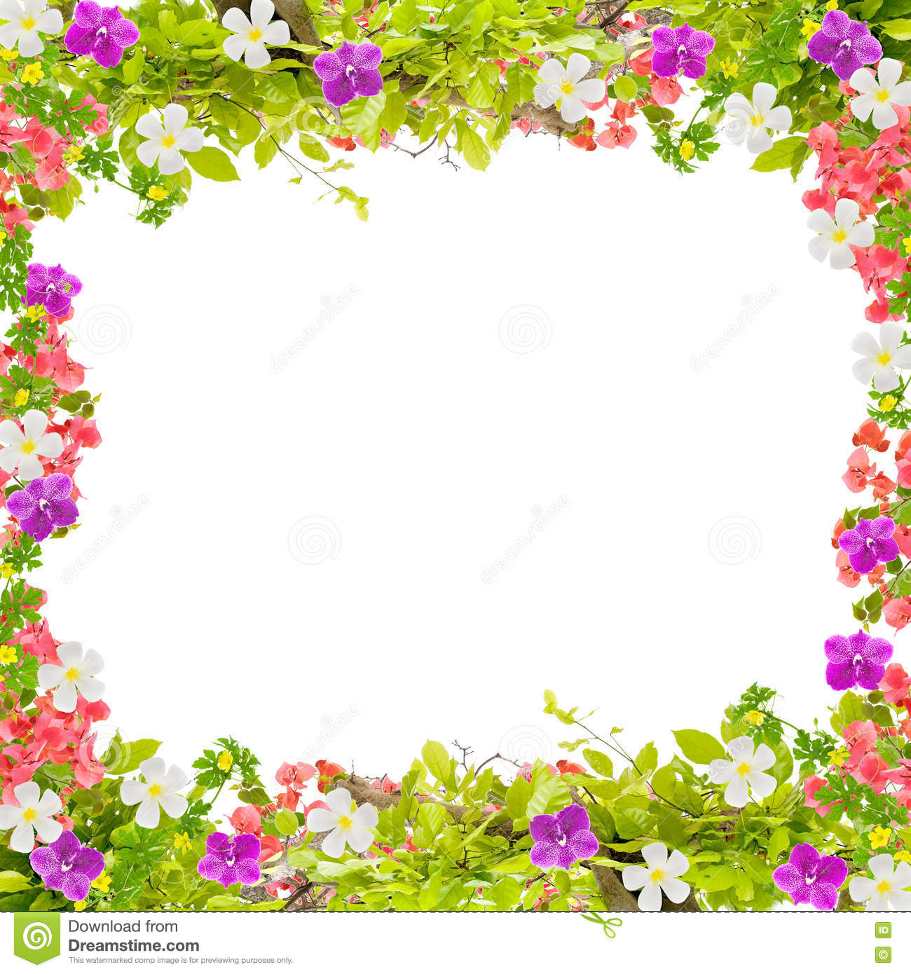 Beautiful Green Leaves Frame With Flower On White Background Stock ...