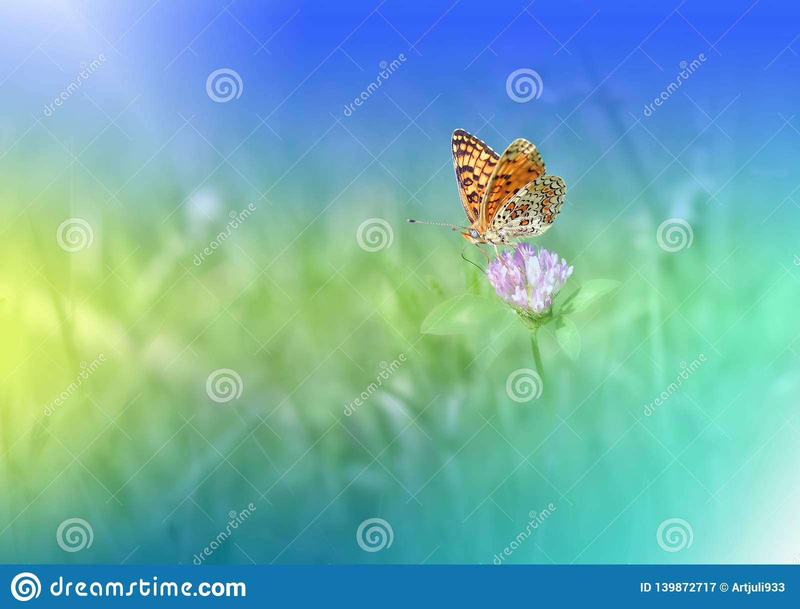 Beautiful Green Nature Background Butterfly Copy Space
