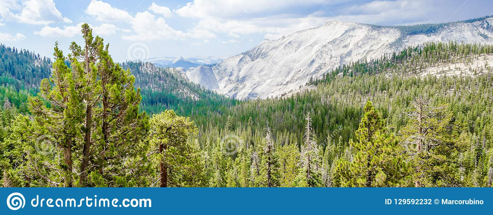 Beautiful green valley with forest in Yosemite National Park, US
