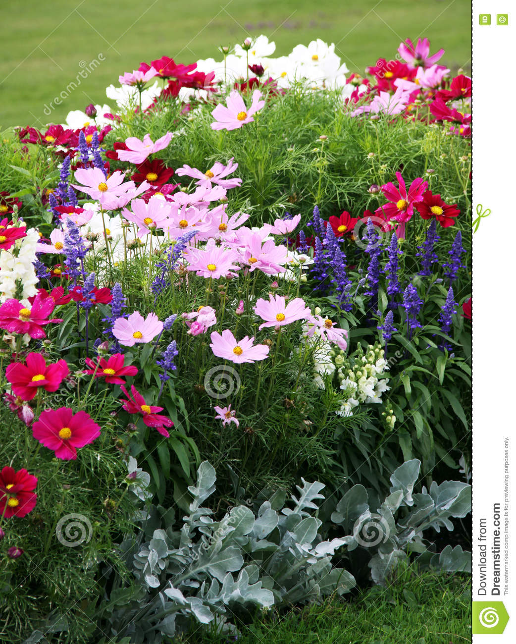 Beautiful Of Flowering Annuals Stock Image Image Of Summer Grove
