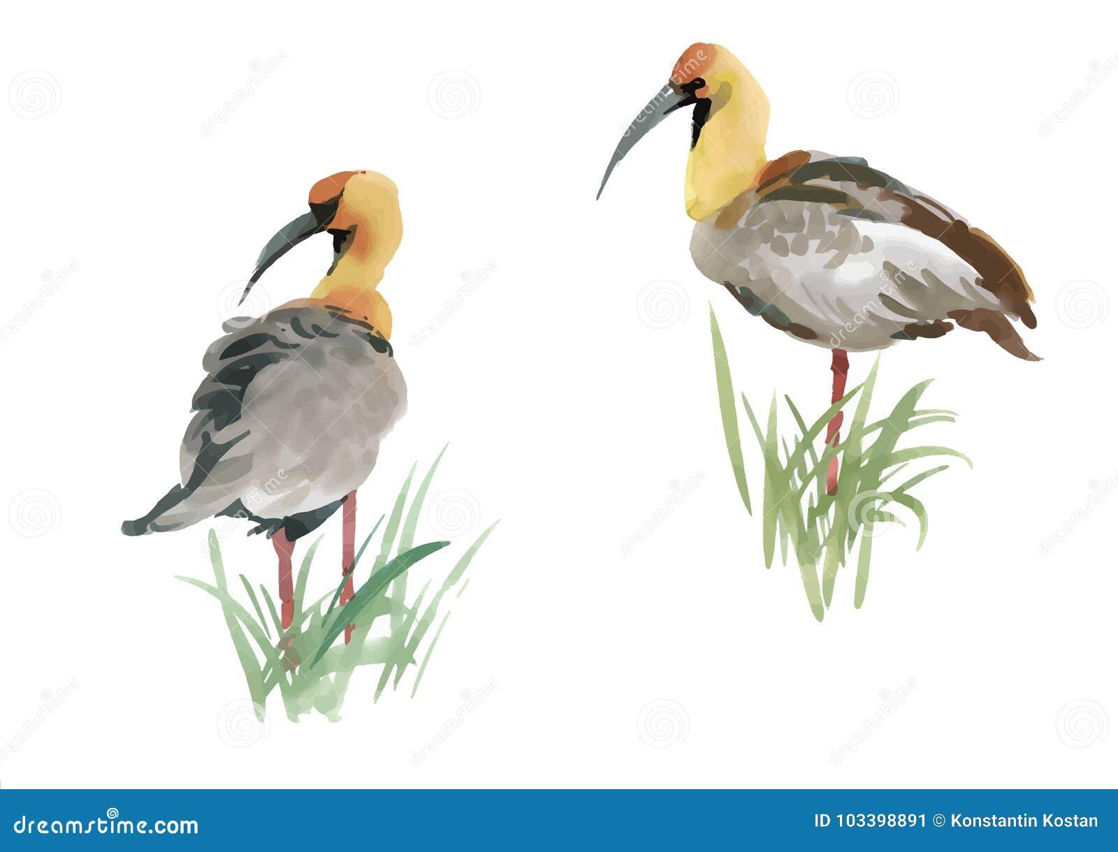 beautiful hand drawn grey birds in grass on white background rh dreamstime com