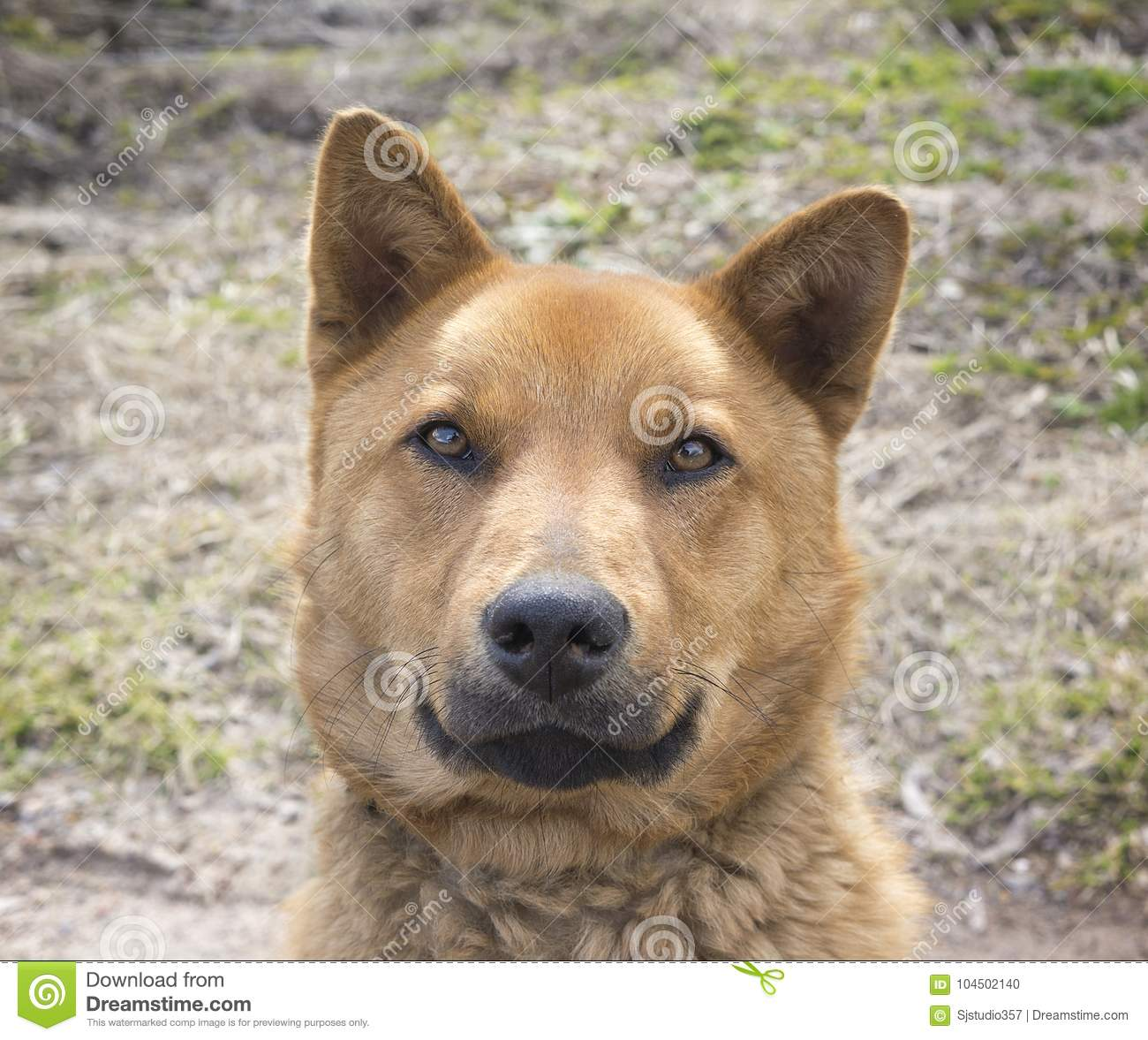 Dog Breed That Looks Like It S Smiling