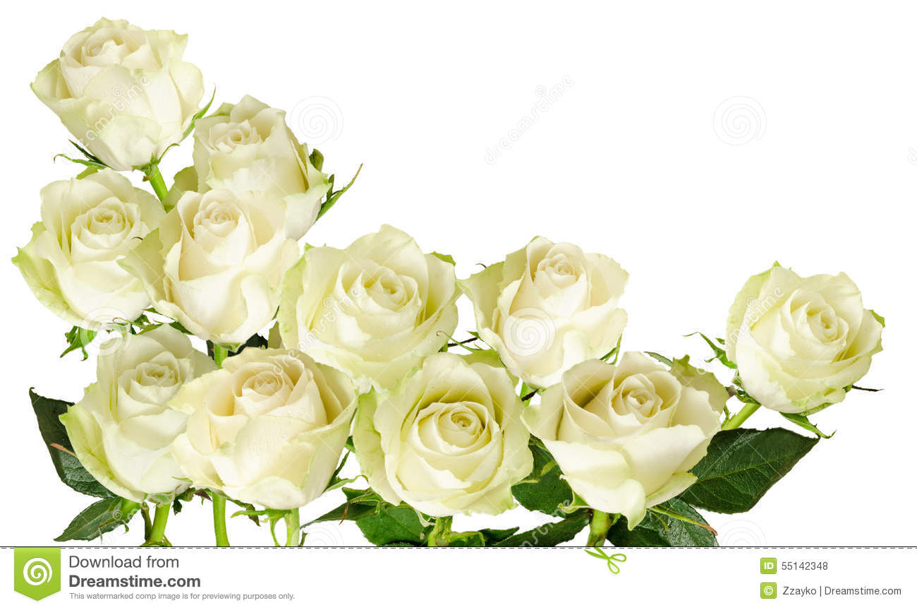 beautiful horizontal frame with bouquet of white roses isolated on white background stock photo. Black Bedroom Furniture Sets. Home Design Ideas