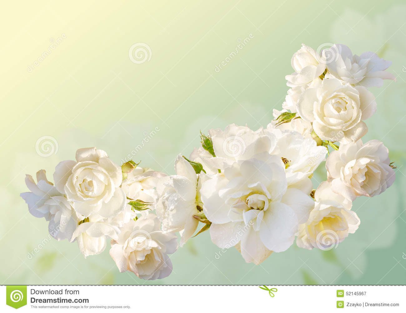 Beautiful Horizontal Frame With A Bouquet Of White Roses With Rain Drops Stock Illustration Illustration Of Design Flower 52145967