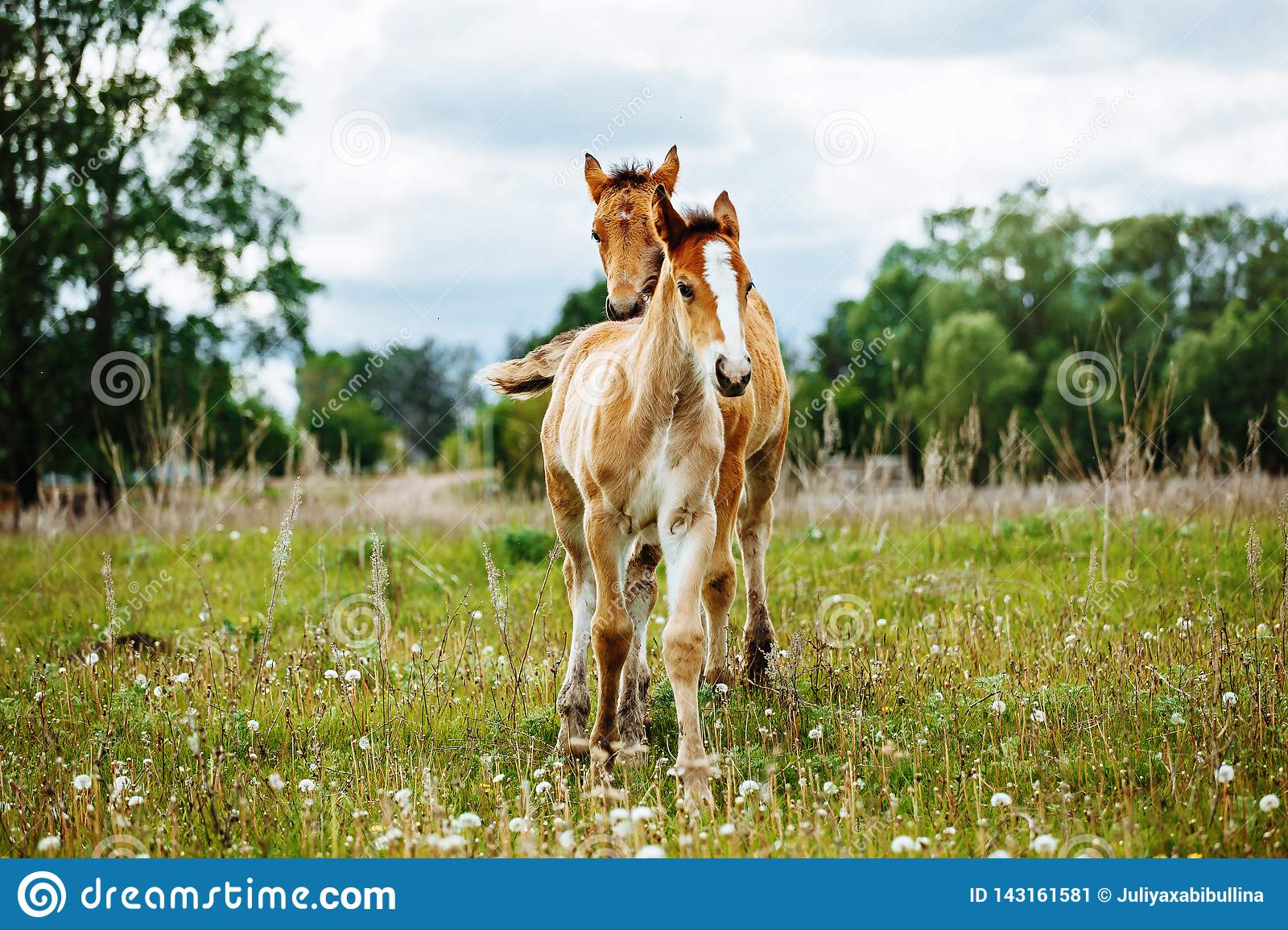Beautiful Horse Is Eating Grass In The Field Stock Image Image Of Field Little 143161581
