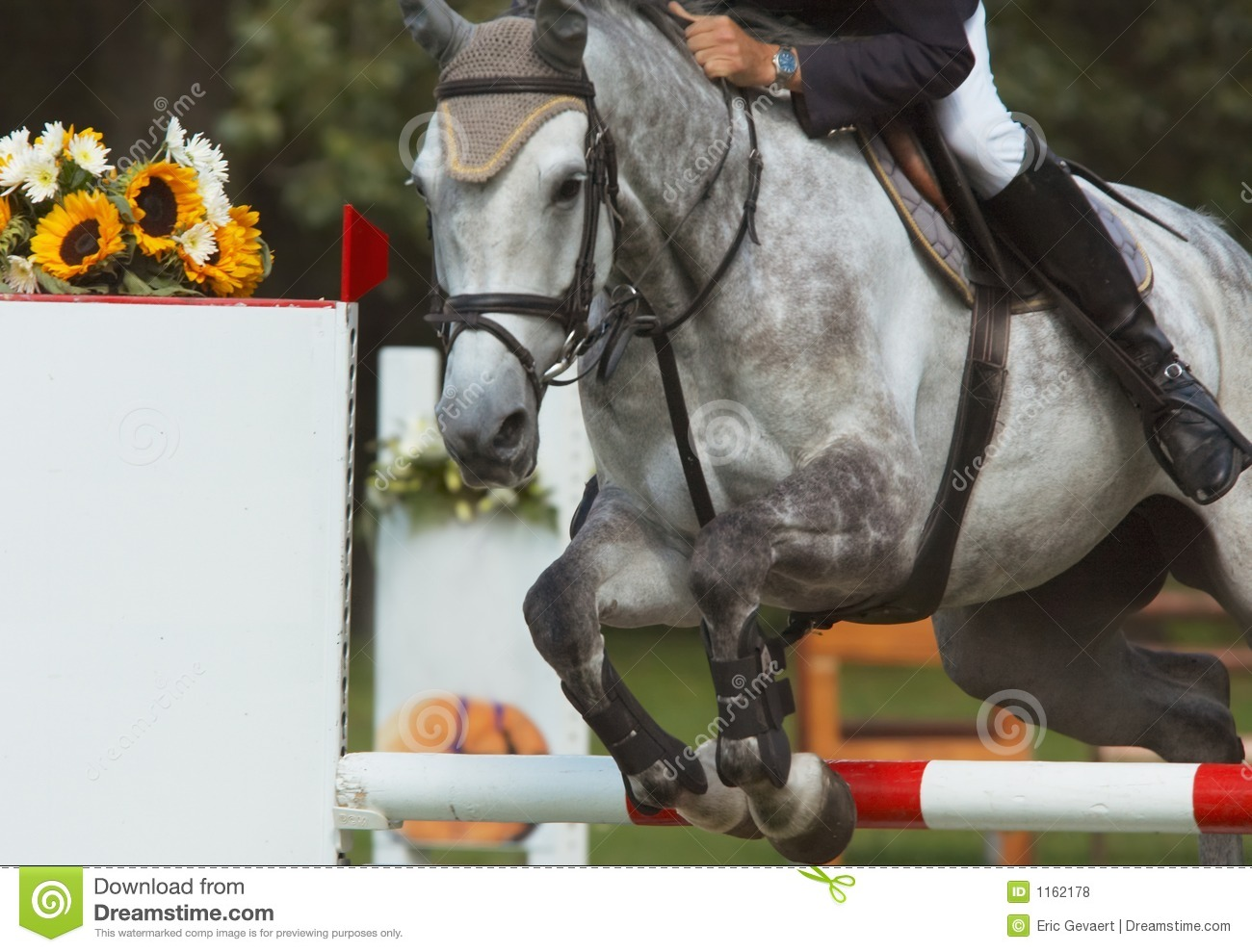 Beautiful horse jumping stock photo. Image of breed, crest ...