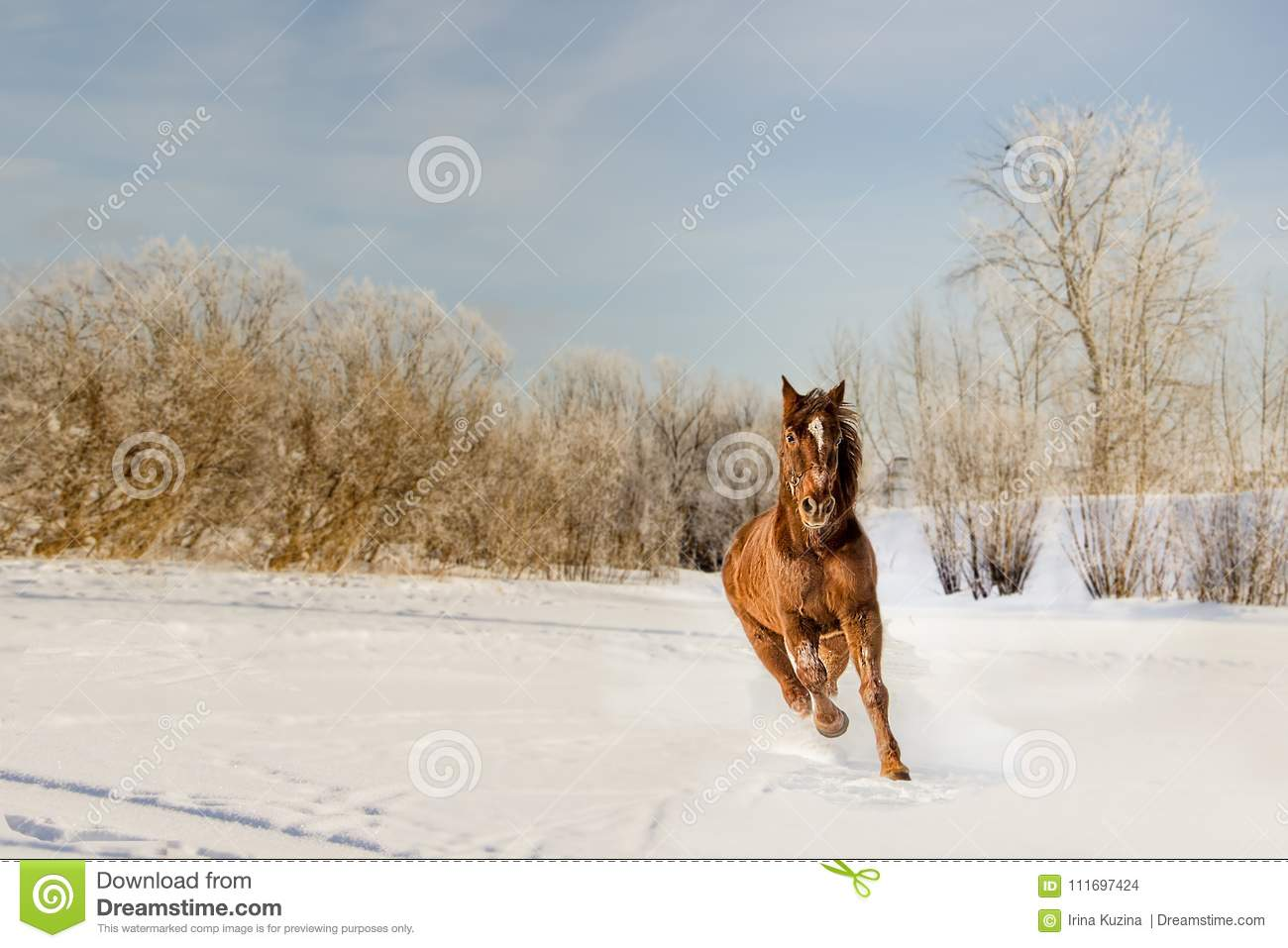 A Beautiful Horse In Motion Stock Photo Image Of Wallpaper