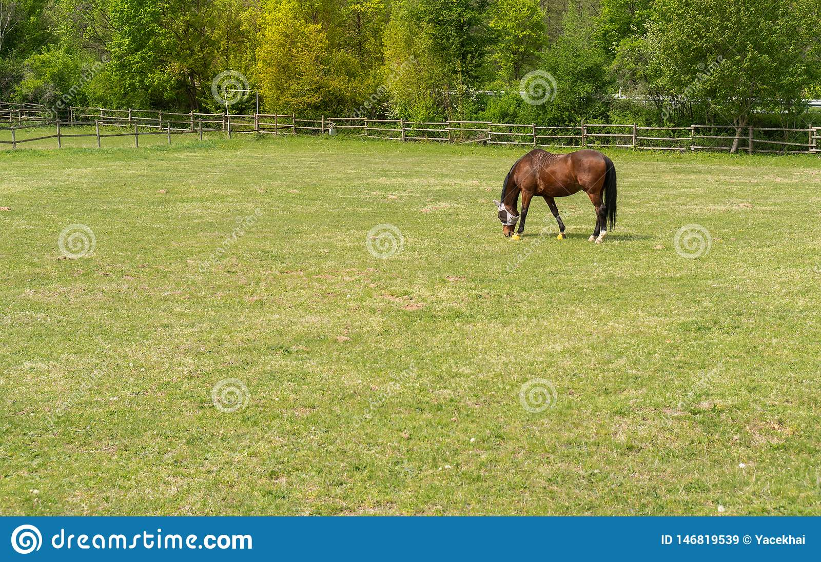 A beautiful horse in the pasture. Catwalk for horses.